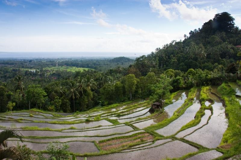 Terrace - Bali