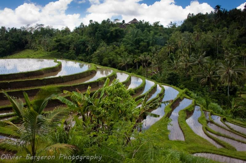 Terrace - Jatiluwih - Bali