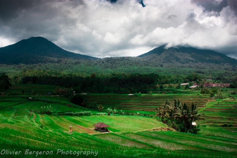 Jatiluwih - Bali