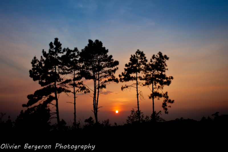 pine sunset - phu ruea national park - thailand