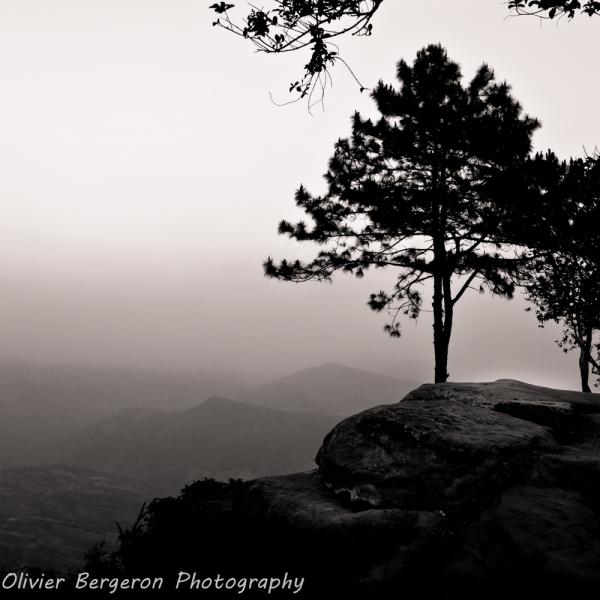 A pine tree - Phu ruea - thailand