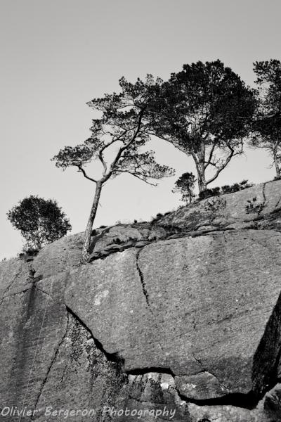 Tree and rocks - preikestolen - norway