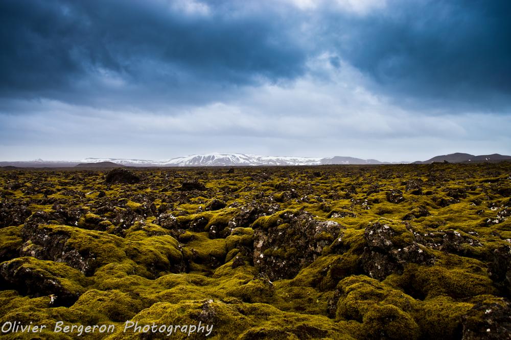 Green Lava field - Fiskidalsfjall Iceland