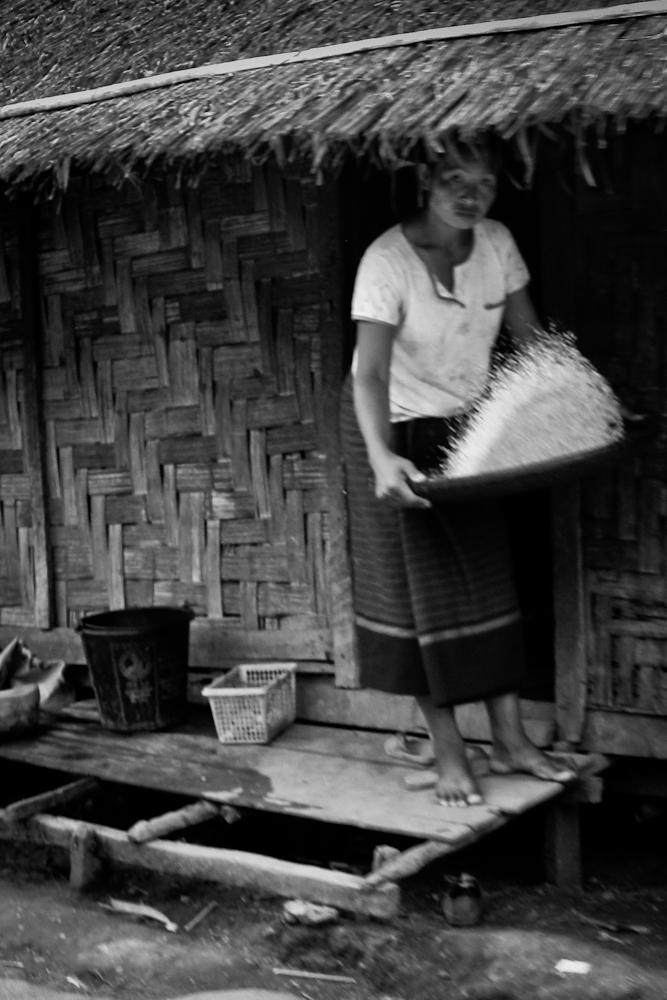 Laos-Rice-1000px-8484