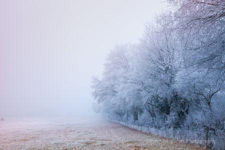 frozen field - France - Nievre -paysage d'hiver - winter landscape