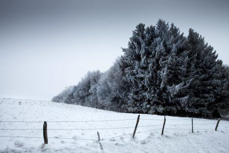Tree line - Lac Pavin - Auvergne winter landscape - Auvergne paysage d'hiver