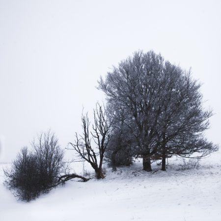 Bosquet - Auvergne - France - winter landscape